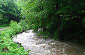 Bach Brzaja, Papuk Naturpark