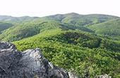 Wald, Naturpark Papuk