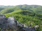 Naturpark Papuk - Wald