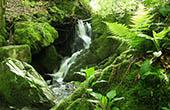 Wasserlauf, Naturpark Papuk