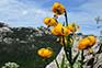 Flora im Naturpark Velebit