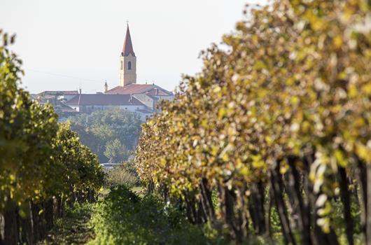 Brtonigla - Kroatien
