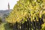 Brtonigla - Wein & Oliven