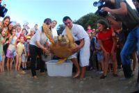 Meeresschildkröte Freiheit