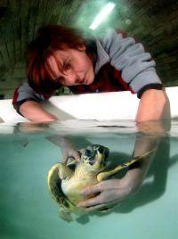 Karin Team Meeresschildkröten