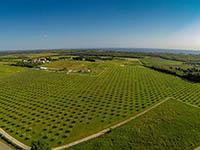 Oma Jolas Olivenfarm