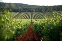 Zentralistrien - Weingärten
