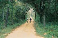 Barbat -  Insel Rab - Radfahren