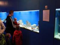 Aquarium Baska
