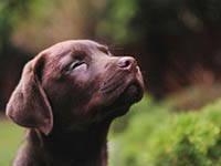 Rab - Hundestrände