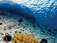 Lubenice - Unterwasserwelt