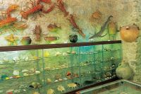 Baska Voda - Muschelmuseum