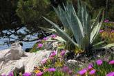 Pflanzen Insel Vis
