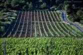 Weingärten Insel Vis