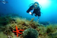 Biograd - Tauchen Bougainville Diving