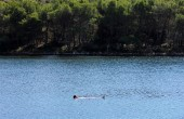 Schwimmen Insel Molat