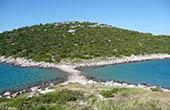 Vegetation, Insel Murter
