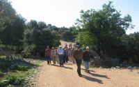 Wandern Olivengärten von Lun