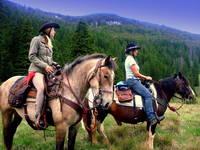 Zadar - Reiten Linden Tree Retreat Ranch