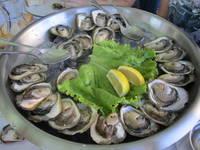 Mali Ston - Austernzucht
