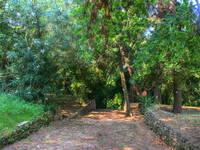 Trsteno - Arboretum