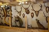 Jagdmuseum