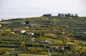 Strunjan - Landschaft