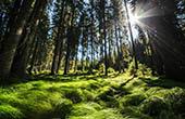 Wald Pokljuka, Nationalpark Triglav