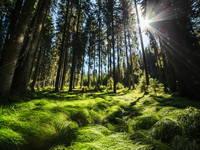 Wald, Pokljuka