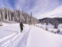Schneewanderung Pokljuka
