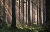Wald im Sommer, Pokljuka
