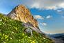 Berg Zelnarica