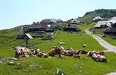 Kühe & Hirtenhütten