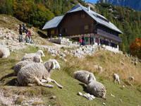 Berghütte Ticarjev dom, Vrsic