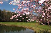 Loch 9, Golfplatz Bled