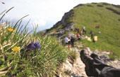 Bohinj - Wandertour Wanderfestival