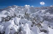 Winterlandschaft Vogel