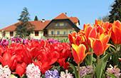 Tulpen Arboretum Kamnik