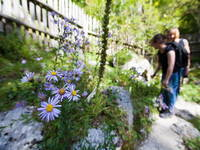 Trenta - Botanischer Alpengarten Juliana