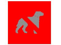 Hunde nicht erlaubt - Strandbad Bled